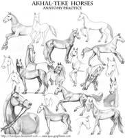 Akhal Teke - anatomy practice by ClaireLyxa