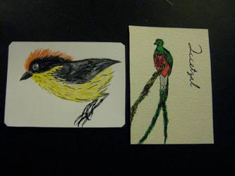 Bird drawing ATCs 2 by KatarinaNavane