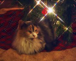 Christmas Kitty 3 by sleddog116