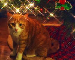 Christmas Kitty 4 by sleddog116