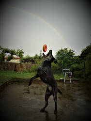 Mojo under the rainbow. by me-and-mojo
