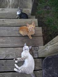 Stairway to Kitties by BLUEamnesiac