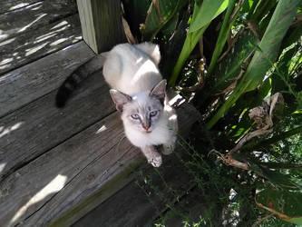 Kitteh in the Garden by BLUEamnesiac