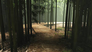 Path in Bamboo Forest by Andywong75