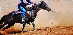Get around. by EquusAustralia
