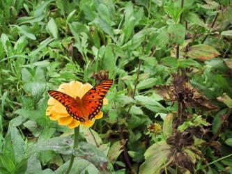 Autumn Butterfly by AngelaSasser-photos