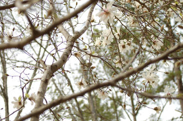 Keep Your Eye on the Birdie by AngelaSasser-photos