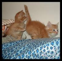 Grand Kittens 15 by AshlieNelson