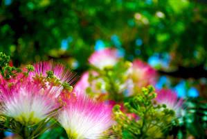 Pink. by Larkwar