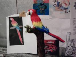 Scarlet Macaw by Speezi