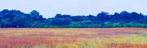 Rainbow Field. by LauraHolArt