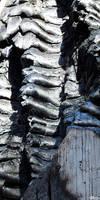 Burnt Sausages by LauraHolArt