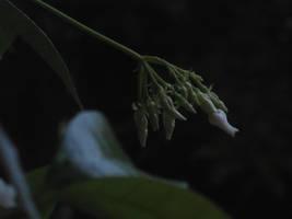 the evening bloom by lishanshan