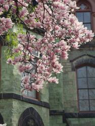 Castle Lily by lishanshan