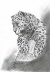 Leopard by SubLeLumiere