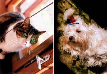 Cat vs. Dog by Leanyna