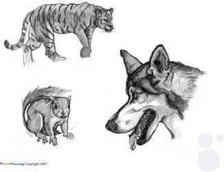 Animal Life Drawings part 4 by chris-fennell