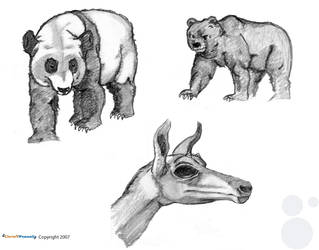 Animal Life Drawings part 1 by chris-fennell