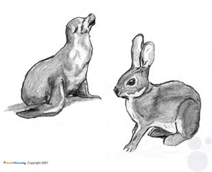 Animal Life Drawings part 3 by chris-fennell