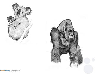 Animal Life Drawings part 2 by chris-fennell