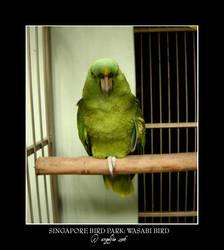 Singapore.11: Wasabi Bird by Angelfae