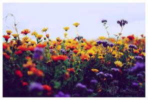 summer's beauty by Atreja