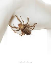 Arachnophobia IV by AntarcticSpring