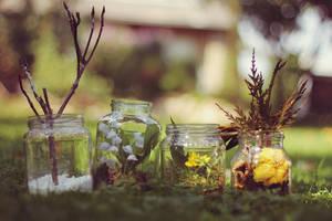 seasons in a jar by violetkitty92