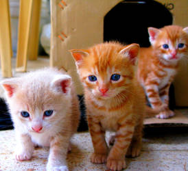 Les trois petits chatons by AliasElectra