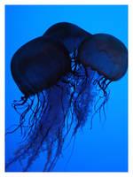 Jellyfish 06 by Igloo61