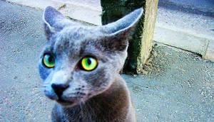 wild street cat by Okeiko