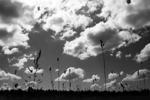 midsummer in Saaremaa by Okeiko