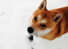 Snow Dog by brandimillerart