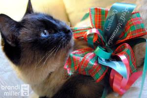 Merry Christmas from Pixel by brandimillerart