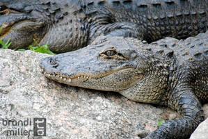 Lazy Gators by brandimillerart