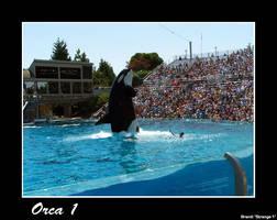 Orca 1 by brandimillerart