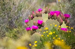 Flowers from the Joshua Tree Forest by Heather-Ferris
