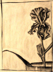 Iris by melydia