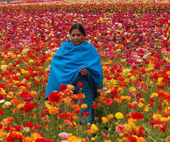 Indian Pashmina by zamir