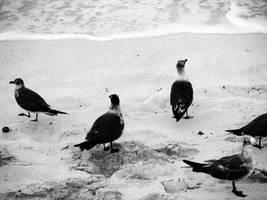 cancun sea rats by Littlelion225
