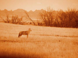 He stands in psuedo sepia by Littlelion225