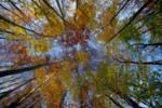 Autumn colors 3 by zaffonato