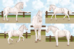 Dancer Conformation Training by PortysPrideRescue