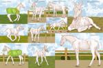 Dancer Foal Training by PortysPrideRescue