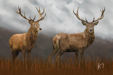 Stags by PortysPrideRescue