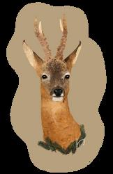 Roe Deer by PortysPrideRescue