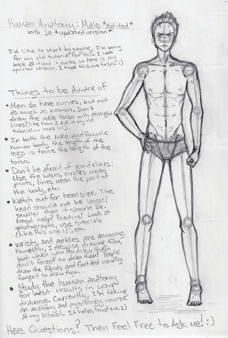Male Anatomy Tutorial Edited By Shoujoartist On Deviantart