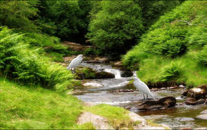 Babbling Brook by welshdragon