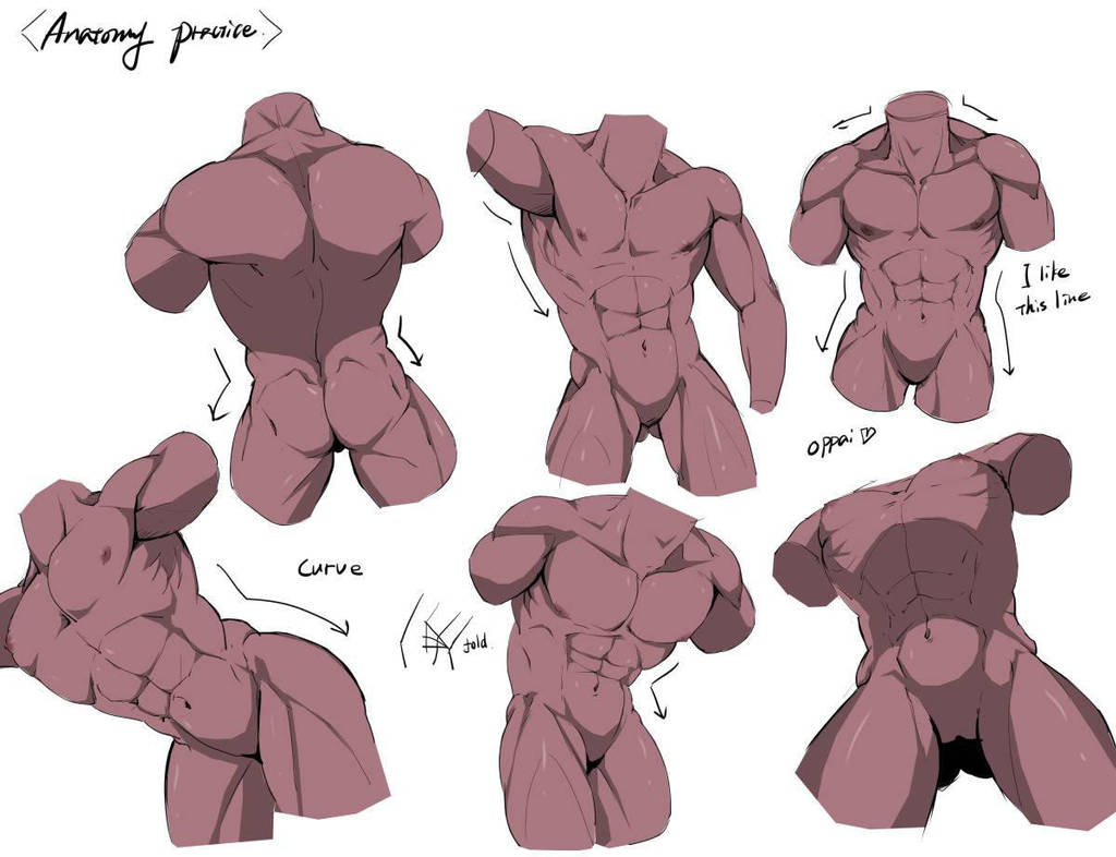 Anatomy practice (male) by Gobusawa