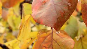 Autumn rain by Andrei-Azanfirei